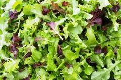 1ère-salade-2016