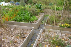 Jardin au carré oct.2010 003